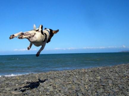 hover-dog-flying-dog-10